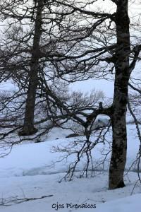 Raquetas de Nieve con Ojos Pirenaicos en el Valle de Ansó (64)