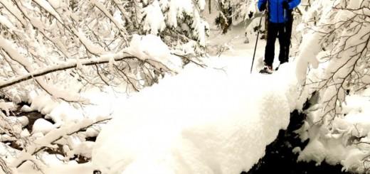 Raquetas de Nieve  para todos los públicos (23)