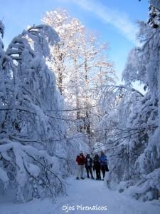 Raquetas de nieve en el Pirineo con Ojos Pirenaicos (14)