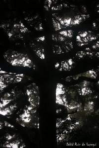Senderismo en La Palma- Ojos Pirenaicos (27)