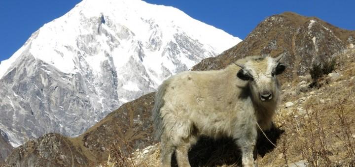 Trekking en Langtang (16)
