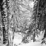 Canfranc Raquetas de Nieve